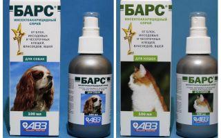 Spraybarer från loppor för katter och hundar