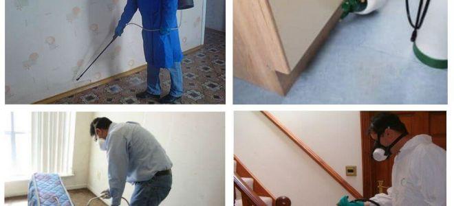 Disinsection från loppor i lägenheten av professionella tjänster