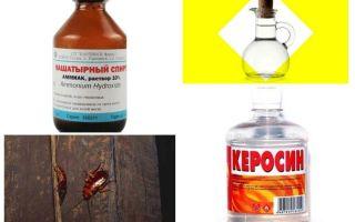 De mest effektiva folkmedicinerna för kackerlackor