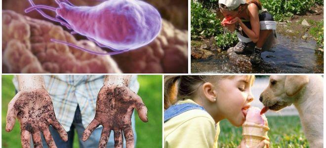 Giardiacyster i avföring av ett barn: hur de ser ut och hur man behandlar