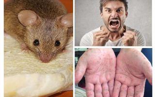 Vad kan infekteras från möss