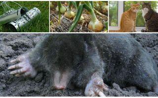 Rättsmedel för mol i sommarstugan och trädgården