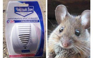 Ultraljud repeller från råttor och möss Ren hus