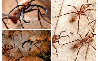 De farligaste myrorna i världen