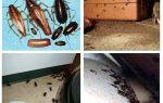Var är kackerlackor gömmer sig i lägenheten