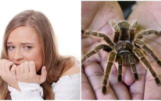 Vad heter frågan om spindlar (fobi) och behandlingsmetoder