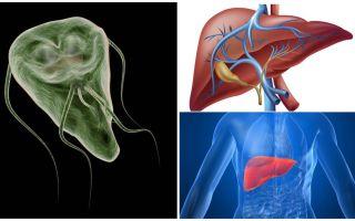Giardia i levern - symtom och behandling