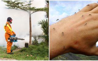 Medel för bearbetning av området från myggor och fästingar