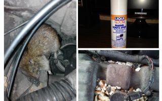 Spruta råttor för bilen