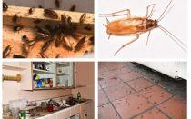 Bli av med kackerlackor i lägenheten en gång för alla