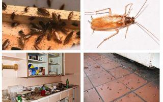 Vad gör du om du såg en kackerlacka i köket