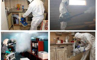 Behandling av kackerlackor i lägenhetspriserna och hemsamtal