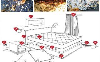 Hur man självständigt hanterar bedbugs i lägenheten