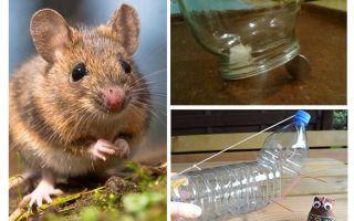 Så att fånga en mus i ett hus utan en musefälla