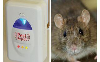 Pest Redzhekt ultraljud repeller gnagare och insekter