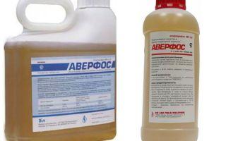 Betydar Averfos från bedbugs
