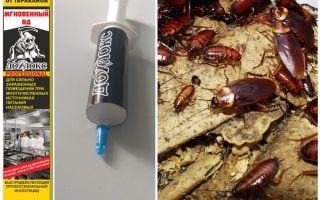 Medverkar Dohloks från kackerlackor