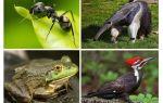 Vem äter myror