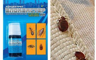 Betydar Blockbuster från bedbugs