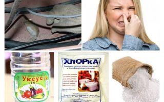 Hur bli av med lukten av möss