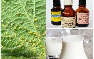 Mjölk med jod från bladlus