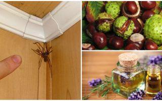 Metoder och verktyg för spindlar i en lägenhet eller privat hus