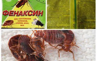Pulver Phenaxin från bedbugs