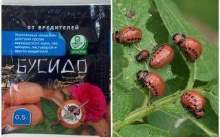 Åtgärd för Bushido Colorado potatisbagel: bruksanvisningar, effektivitet, recensioner