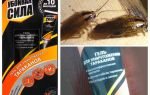 Lösning Skadlig kraft från kackerlackor
