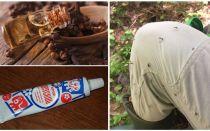 Folkmedel för myggor