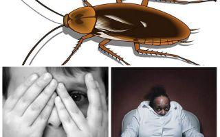Varför räddar människor kackerlackor