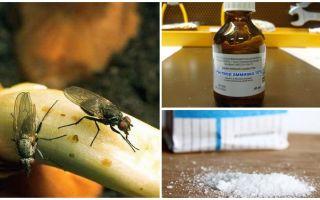 Hur bli av med lökflugor