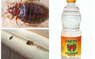 Vinäger mot bedbugs i lägenheten