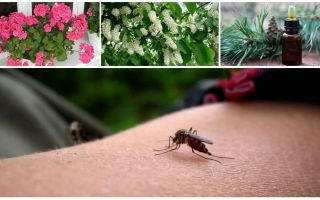 Hur man hanterar myggor i en lägenhet eller ett hus