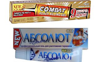 Bästa geler för bedbugs: Global, Absolute, Fipronil, etc