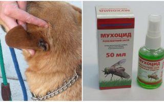 Hur och vad att behandla en hunds öron från flugor