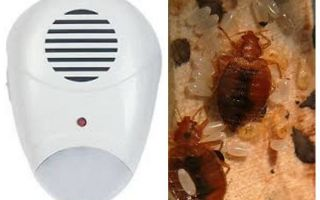Repeller Pest Repeller från bedbugs