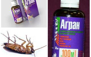 Agran botemedel mot kackerlackor