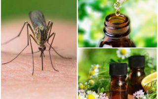 Eteriska oljor från myggor