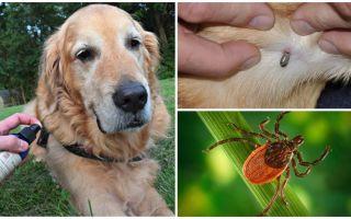 Spray för hundar mot fästingar och loppor