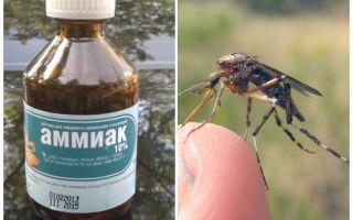 Flytande ammoniak från myggor