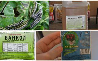 Hur bli av med larver på kål folkmedicin