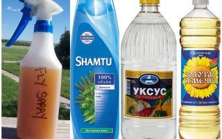 Gör-det-själv myggavvisande schampo + vinäger