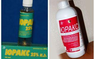 Betydar yuraker från bedbugs