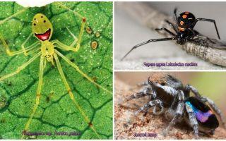 De vackraste spindlarna i världen