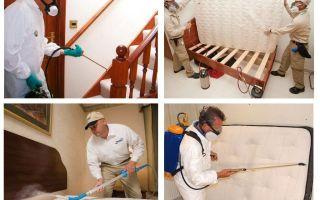 Förstöring av bedbugs i lägenheten med en garanti