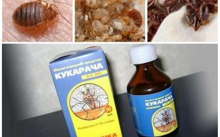 Cucaracha botemedel mot bedbugs
