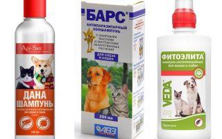 Den mest populära och effektiva flea shampooen för hundar