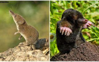 Hur skiljer man en skruv från en mol