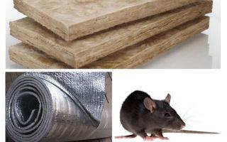 Vilken typ av isolering äter inte råttor och möss